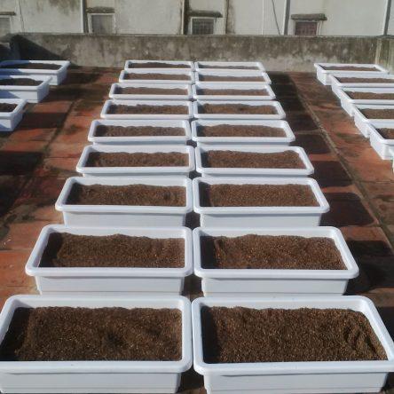 Khay nhựa thông minh trồng rau tại nhà – Khay songhongagri.com