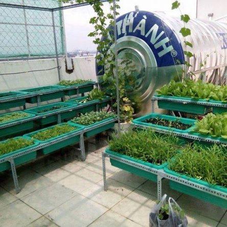 Mô hình trồng rau sạch tại nhà với kệ thiết kế bậc thang (tam cấp).