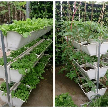 Mô hình trồng rau sạch tại nhà với kệ, móc thiết kế nghệ thuật.