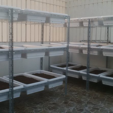 Mô hình trồng rau sạch tại nhà với thiết kế kệ 3 tầng