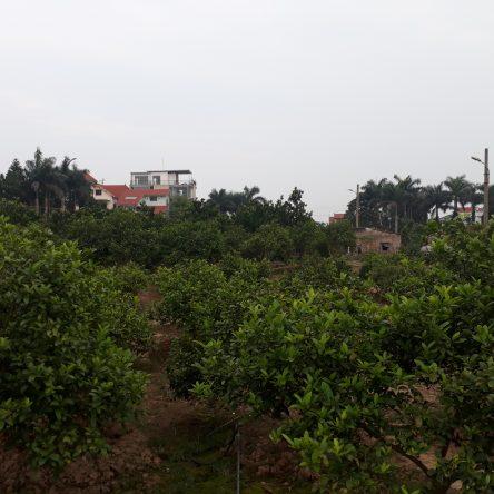 Phân trùn quế cho nông nghiệp sạch, nông nghiệp hữu cơ.