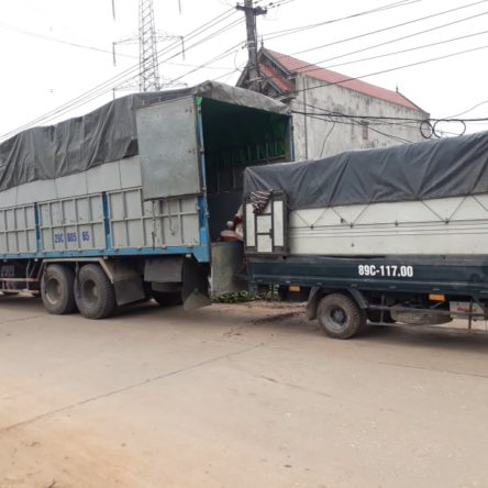 Bán phân trùn quế – 1200 tấn cho một đại gia Văn Giang.