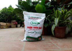 Phân trùn quế (phân giun quế) – Phân hữu cơ cho Nông nghiệp sạch.